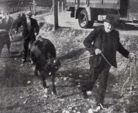 View the album Cattle Sales 1958