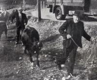 cattlesales-5-sm.jpg