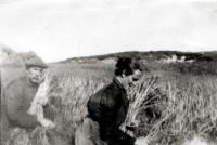 harvest1_1.jpg
